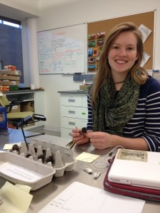 Shona assesses seedheads from her cross-compatibility experiment