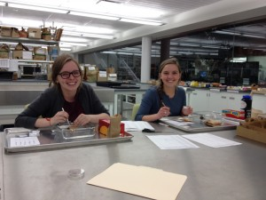 Josie & Emma dissecting Echinacea seedheads