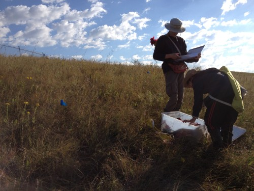 Katherine and Maria collecting data at a prairie remnant