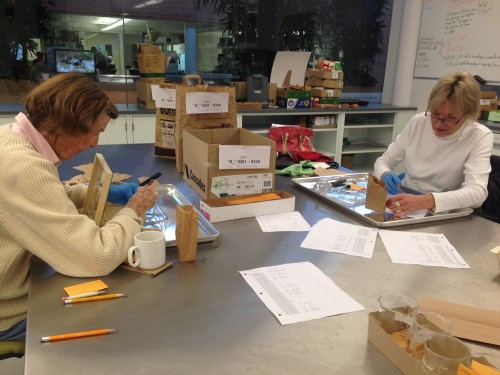 Susie and Susan dissecting Echinacea heads in the lab