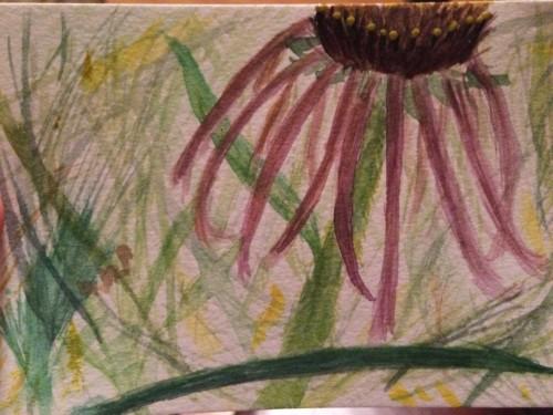 Lea's watercolor of Echinacea!