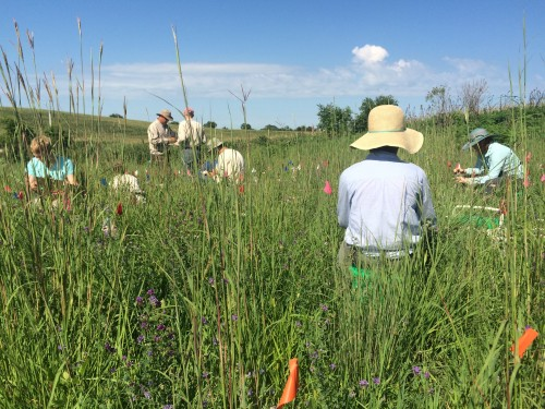 A cross-pollinator's eye view of a well-organized team carrying out crosses in p1.