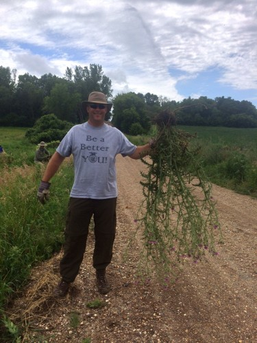 Matt's huge thistle!