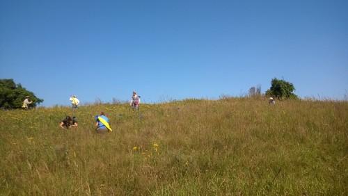 The lush hillside