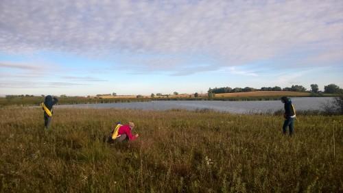 Searching in an Echinacea barren land