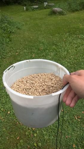 A gallon of Bouteloua