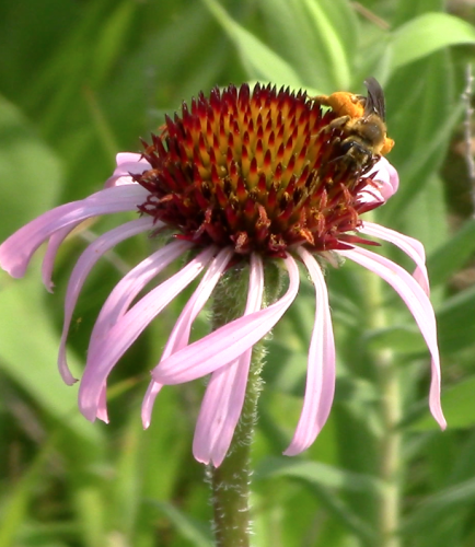 Pollinator Efficiency Project 2014