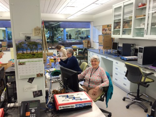 "Lois ""The Achene Queen"" - our most decorated counter with more than half a million achenes counted to date!"