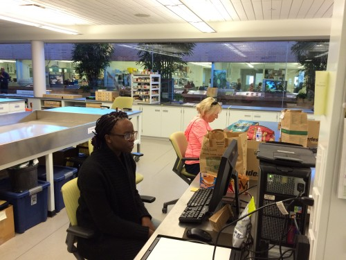 Sarah scanning heads from the remnant populations while Susan focuses hard on cleaning.