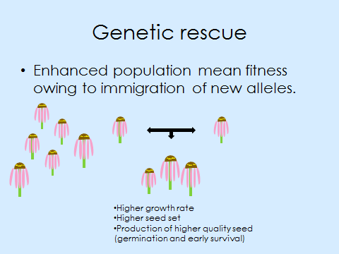 geneticRescueSlide
