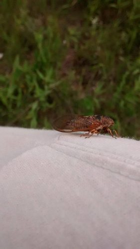 A Big 'ol bug (of unknown species) who decided to take up residence on my arm for a while this morning.