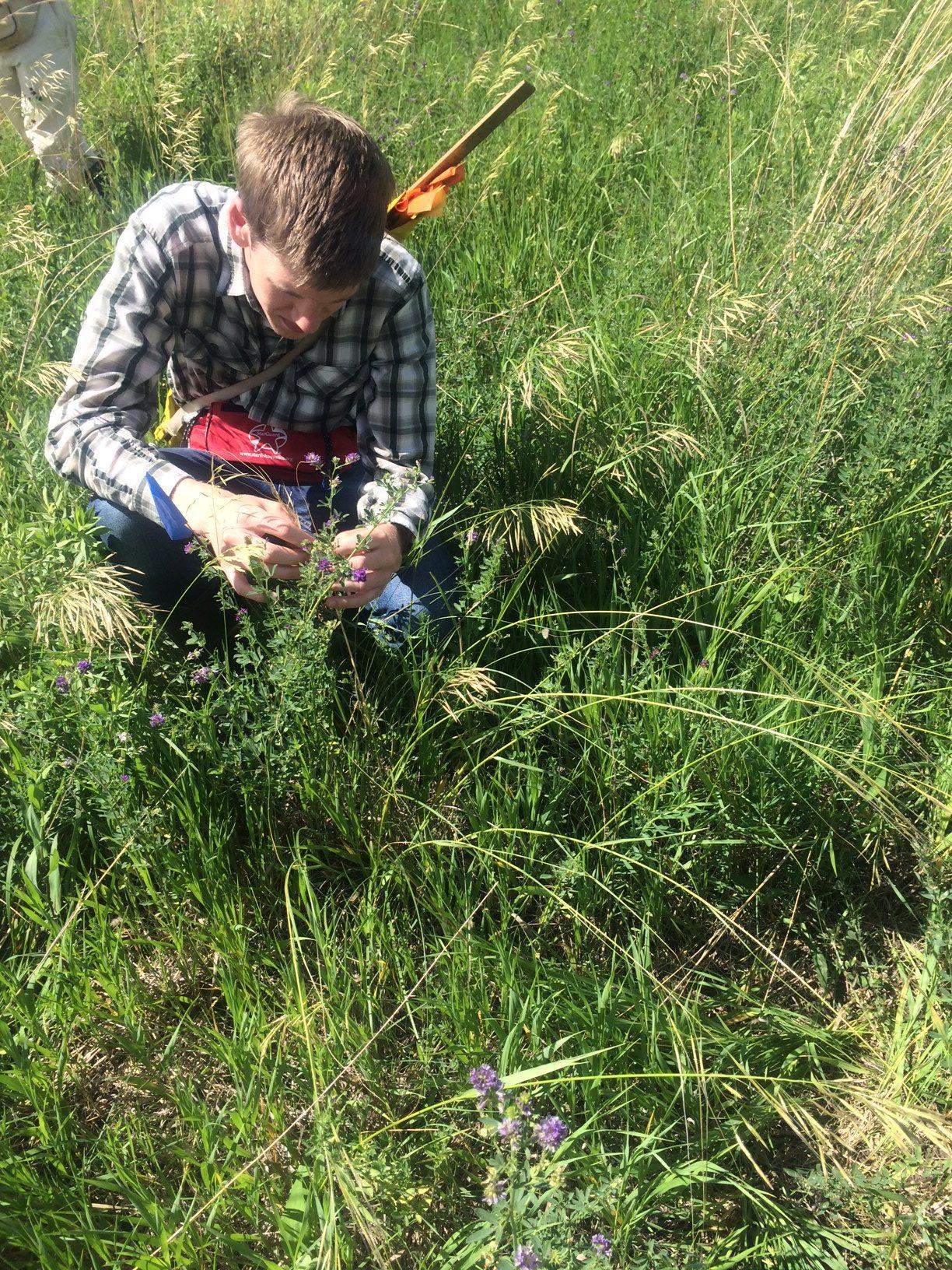 Hesperostipa Common Garden Experiment « The Echinacea Project