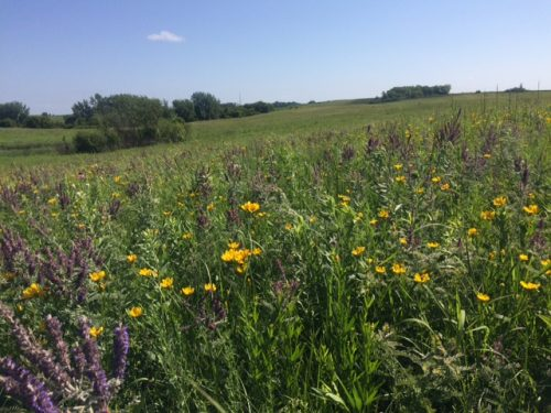 Staffanson was beautiful during pollinator observations!
