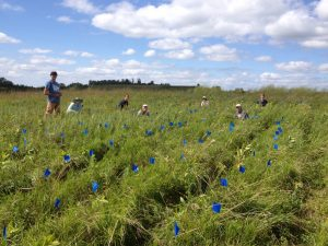 The team after an initial measurement of p9. Blue flags are positions where Echinacea weren't found.