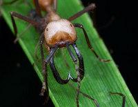 Ant_image.jpg