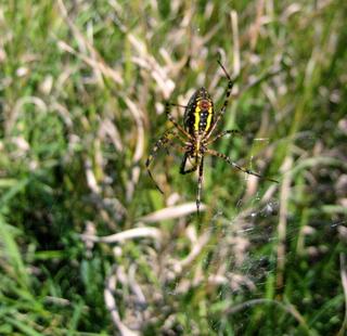 BM_spider.jpg