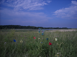 Echinacea at Hegg Lake
