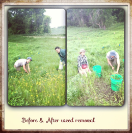 weed_removal.PNG
