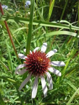last_day_flowering.jpg